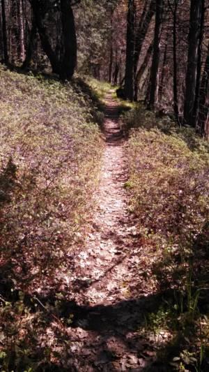 Trail Shot 2