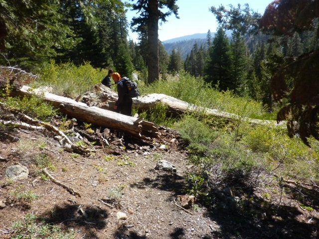 More Logs Acrosss Trail