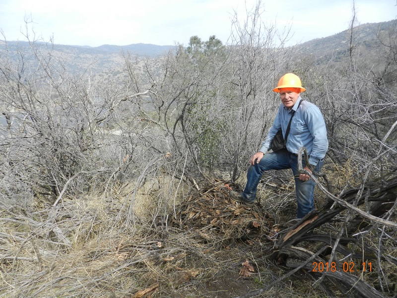 Rich With Brush Pile