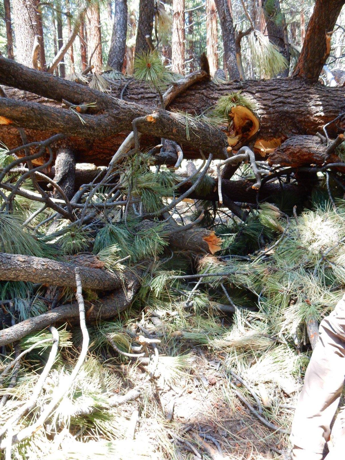 B2 Big Tree Mess