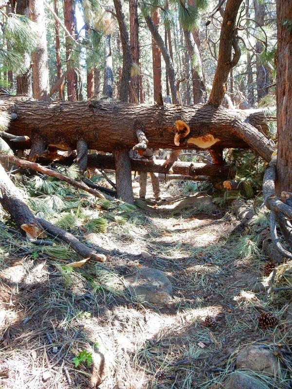 B3 Tree Mess 2