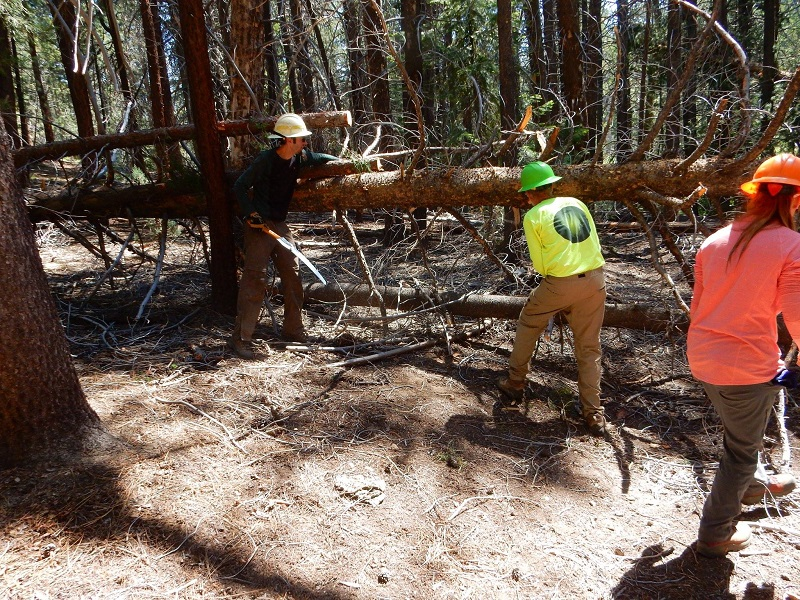 Beggining The Process Of Removing The Trees From Trail
