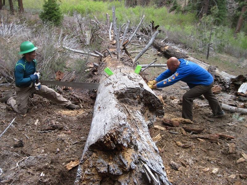 Cutting Tree 2