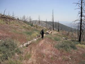 5. Tree Ajacent To Trail