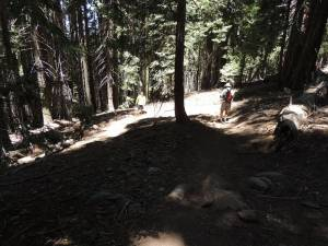 80\' Rutted With Reroute