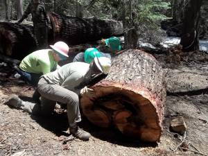 Cross Cut Certification 05-14-12 020
