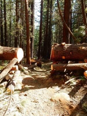 B8 Finished Trees Cut Off Trail