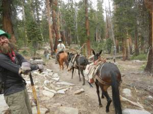 Horses Carrying Saws