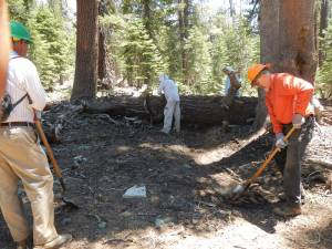 Tree Accross Trail People Working