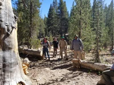 Tree Crew 2