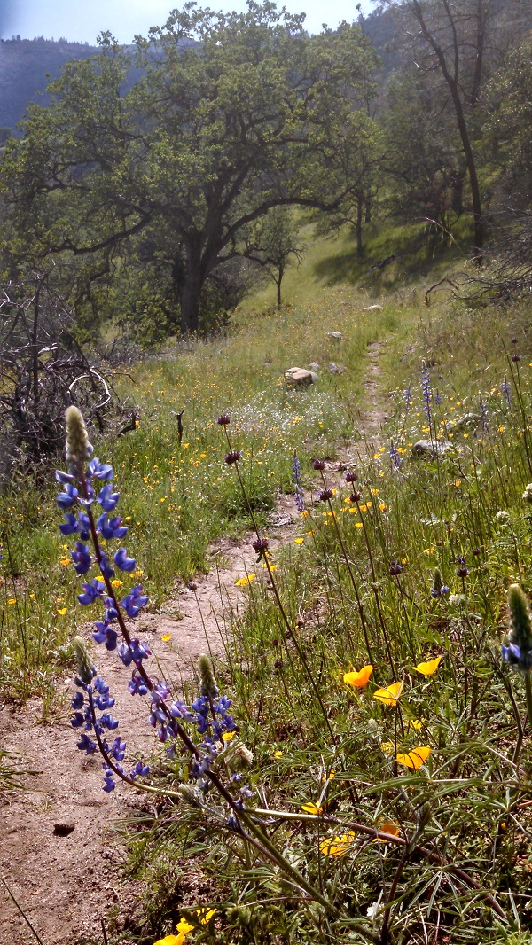 Trail On The Way In