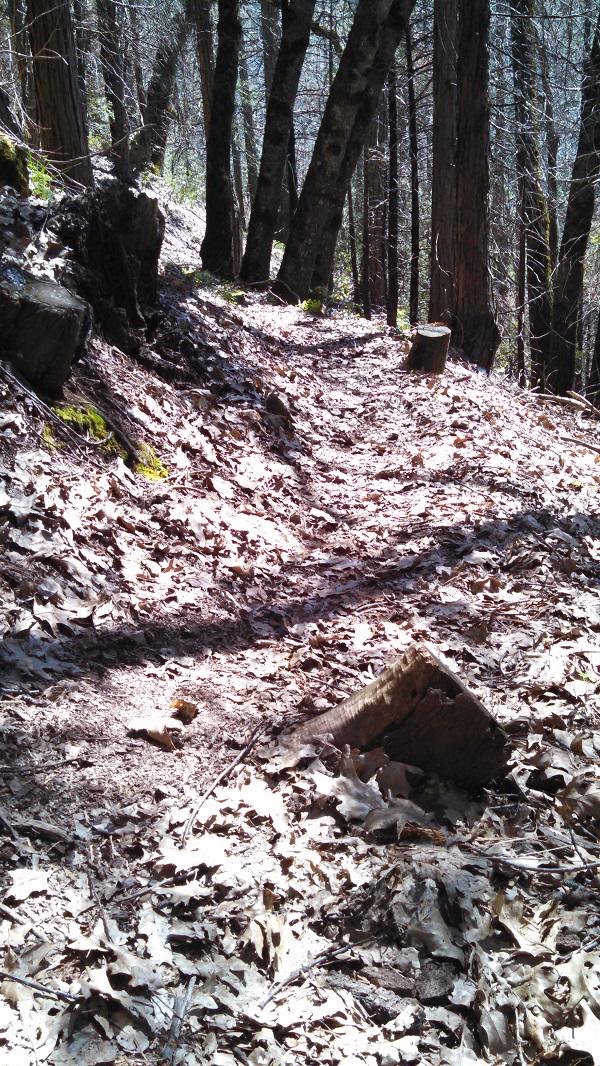 Trail Shot 4