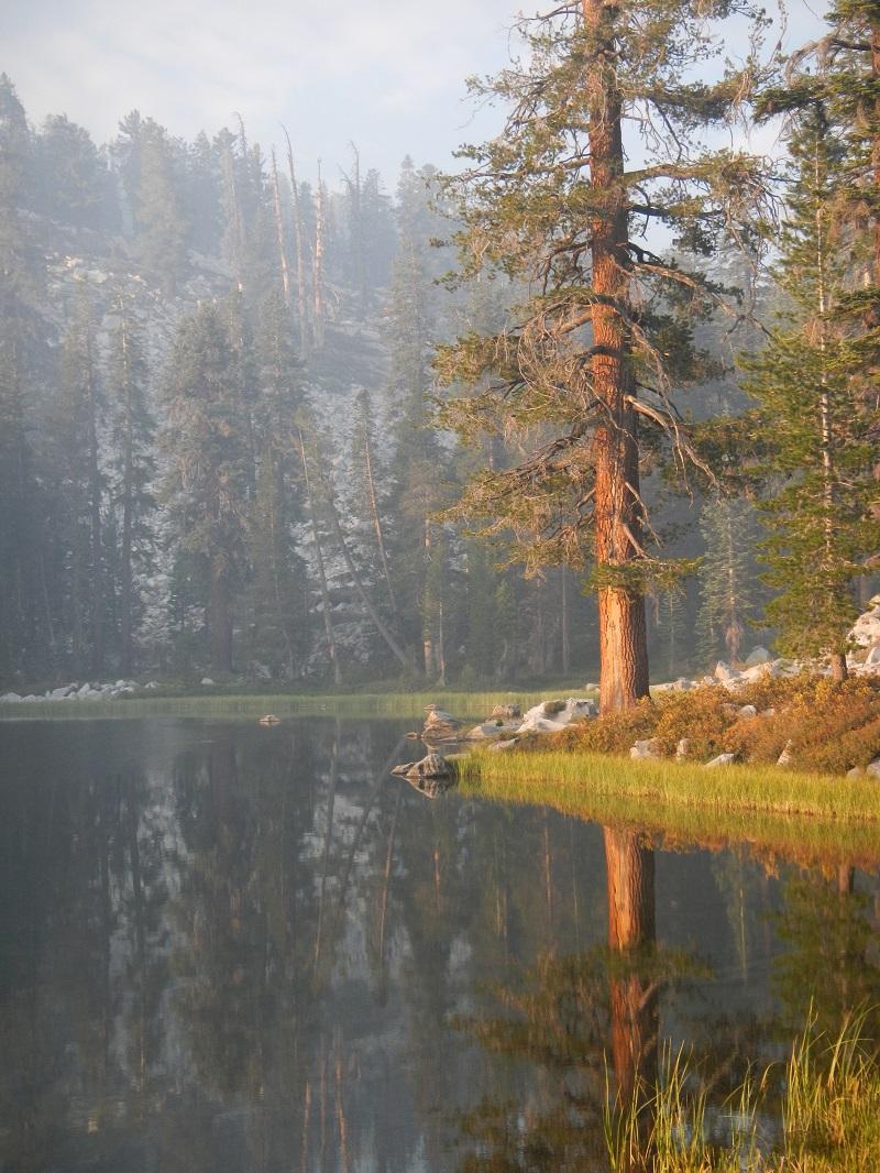 Tree Next To Lake